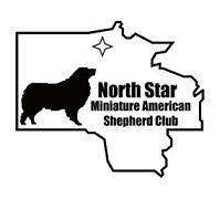 North Star Miniature American Shepherd Club